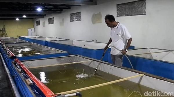 Khusus Kampung Patin, Sandi menilai ada peluang untuk memajukan ekonomi warga sekitar. Terutama dengan hasil panen ikan patin yang dimulai dari pembibitan hingga menjadi produk lokal dan bisa diandalkan.