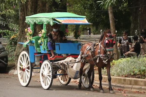 Selain kuda, ada jug kereta kencang atau dokar yang bisa ditumpangi oleh wisatawan. Foto: Wisma Putra/detikcom