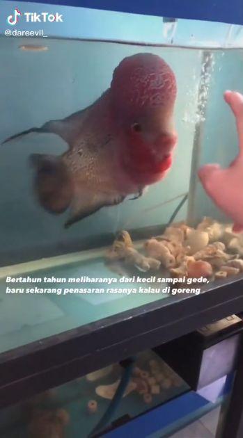 Ikan lohan digoreng, rasanya mirip ikan nila