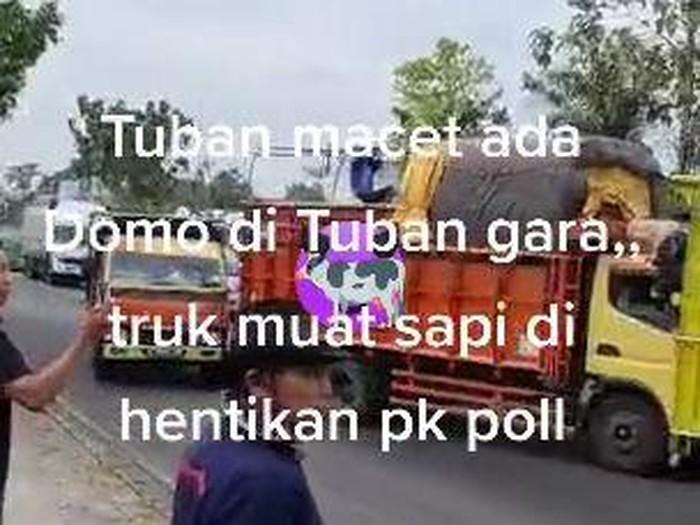 viral sopir truk sapi luruk pos polisi di tuban
