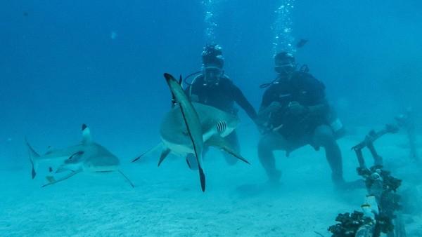 Selain itu pulau ini juga merupakan titik menyelam terbaik di Morotai untuk melihat hiu dari dekat.