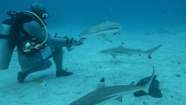 Penelitian hiu selama ini di Indonesia menurut perintis shark diving, Darmawan Ahmad Mukharror, biasanya terbatas pada hiu tangkapan nelayan yang mendarat di pelabuhan perikanan. Sehingga pembahasan lebih pada aspek biologi dan fisik serta pakan hiu. Tak banyak yang membahas tentang perilaku hiu di Indonesia.