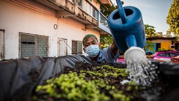 Salah satu pemilik perusahaan taksi menyebut membuat kebun sayur di atas atap taksi menjadi langkah terakhir untuk menyambung hidup.(Getty Images/Lauren DeCicca)