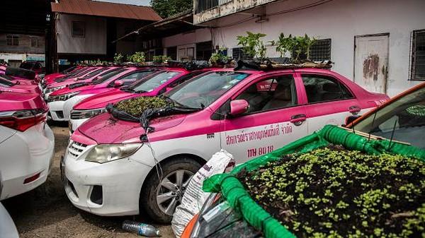 Adalah karyawanRatchaphruek Taxi Cooperative yang menciptakan kebun sayur mini. Merekamembentangkan kantong sampah hitam yang diikatkan pada bingkai bambudiatas atap mobil. (Getty Images/Lauren DeCicca)