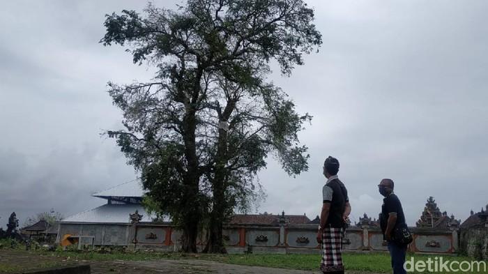 Fenomena Burung Pipit Mati di Bali-Cirebon, Ini Fakta-fakta Barunya