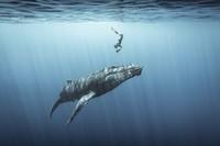 Ocean Photography Awards 2021