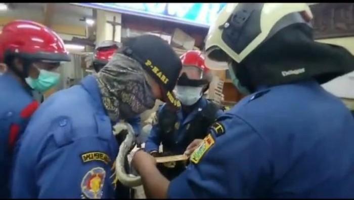 Proses evakuasi ular sanca 3 meter di Toko di Jaktim