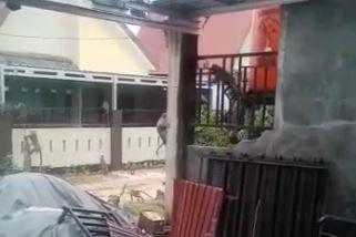 Screenshot video viral gerombolan monyet masuk ke permukiman warga di Kalsel (dok. Istimewa)