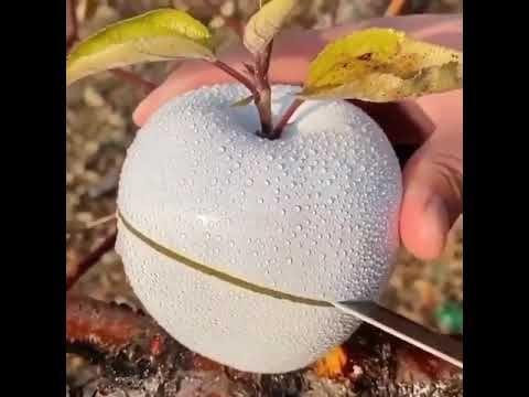 Setelah Apel Mutiara, Kini Ada Apel 'Putri Salju' yang Mirip Es Batu