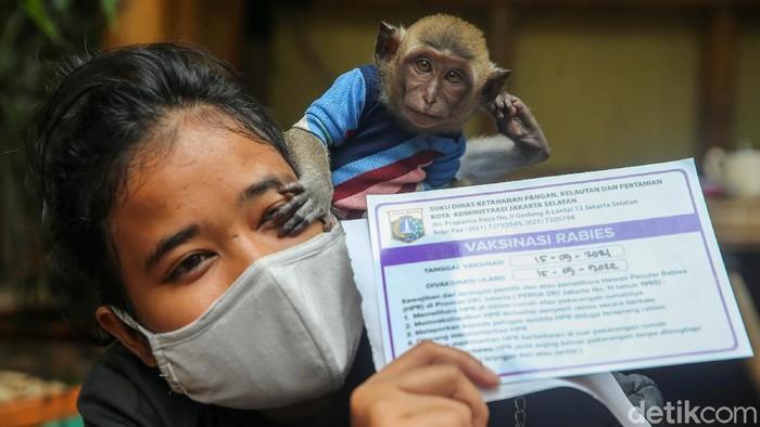 Suku Dinas Ketahanan Pangan, Kelautan dan Pertanian Kecamatan Pesanggrahan, Jakarta Selata, melakukan vaksinasi rabies untuk hewan di Jakarta.