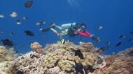 Kisah Pelaku Wisata di Wakatobi & Tanjung Puting Bertahan Saat Pandemi