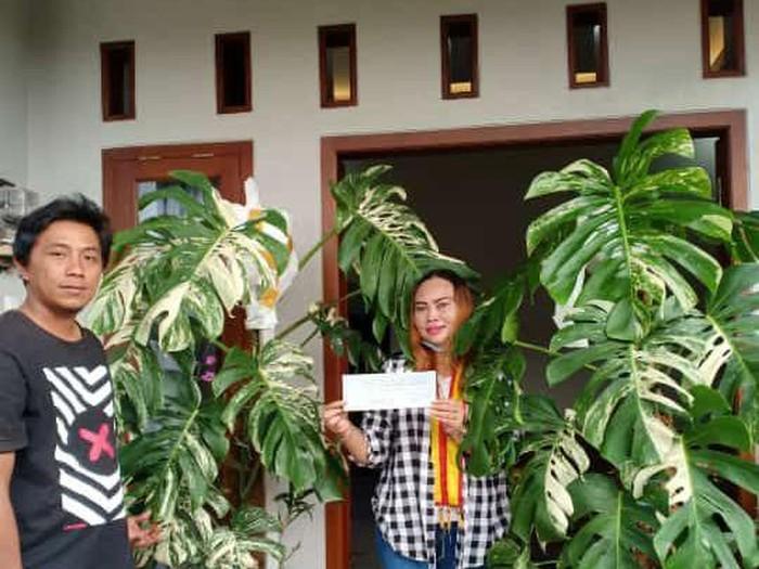 Foto emak-emak viral yang membeli tanaman hias Rp 200 juta.