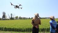 Fokus Digitalisasi, Sektor Pertanian Indonesia Diapresiasi Bank Dunia