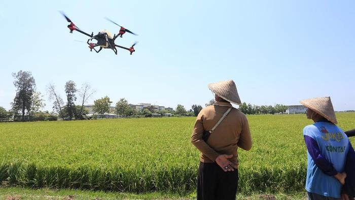 Petani melihat pesawat tanpa awak (Drone) yang digunakan untuk menyemprotkan cairan pestisida di areal sawah desa Krangkeng, Kecamatan Krangkeng, Indramayu, Jawa Barat, Kamis (16/9/2021). Pemerintah kecamatan setempat melakukan uji coba penggunaan drone untuk membantu mengurangi beban para petani dan meningkatkan efisiensi pertanian. ANTARA FOTO/Dedhez Anggara/foc.