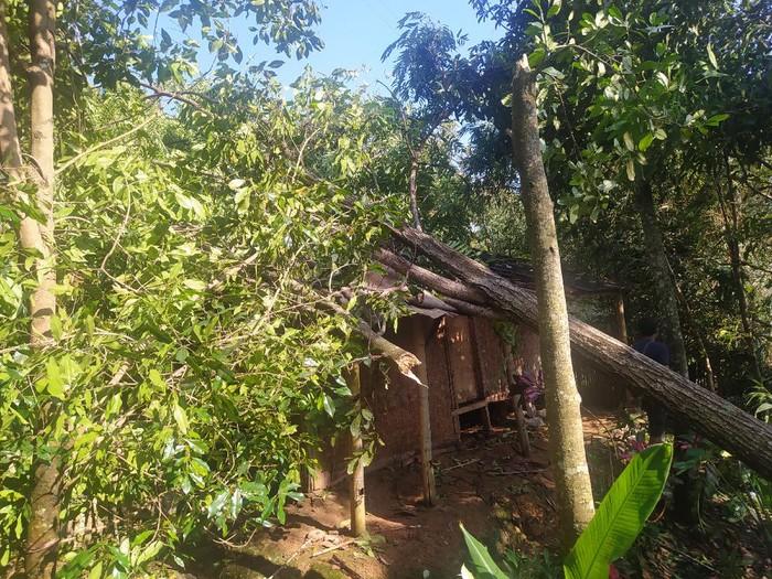 Rumah warga di Cianjur rusak tertimpa pohon gegara puting beliung.