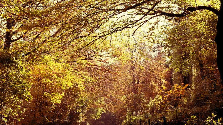 Wychwood Forest di Inggris