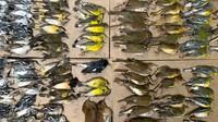 Polusi Cahaya Bunuh Ratusan Burung Saat Migrasi