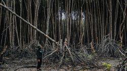 Kerusakan Hutan Bakau RI Disorot dalam Lomba Fotografi Mangrove Dunia