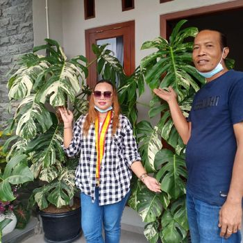 Kisah viral wanita yang membeli tanaman hias Rp 225 juta.