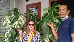 Pengakuan Emak-emak Viral Beli Tanaman Hias dari Tawangmangu Rp 225 Juta