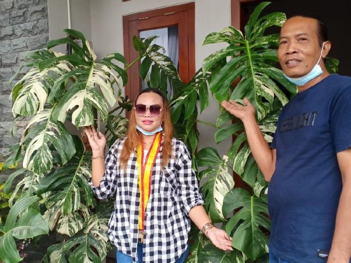 Foto Sri dan suaminya usai membeli tanaman hias monstera king variegata. Foto: Dok. pribadi Sri Hastuti.