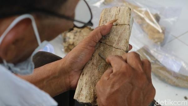 Ada dua kegiatan yang digelar di Museum Patiayam Kudus. Pertama kegiatan inventarisasi dan yang kedua konservasi koleksi puluhan fosil hewan purbakala.