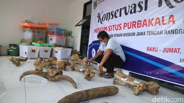 Sebanyak 61 koleksi fosil purba dari gajah hingga rusa di Museum Patiayam Kudus dikonservasi dan didata oleh tim dari Museum Jawa Tengah Ronggowarsito. Kegiatan ini diikuti ada 10 orang dan digelar selama tiga hari.