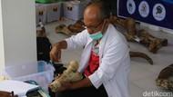 61 Koleksi Fosil Museum Patiayam Dikonservasi, dari Gajah Hingga Rusa