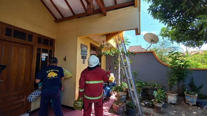 Damkar kota probolinggo musnahkan sarang tawon ndas
