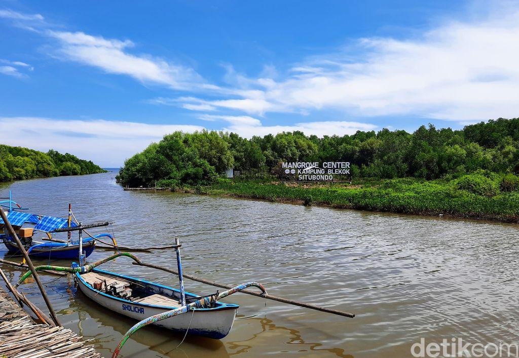Hutan Mangrove Kampung Blekok Situbondo