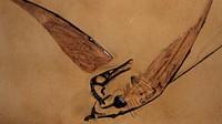 Naga Terbang Sungguh Ada, Fosilnya Ditemukan di Gurun Atacama