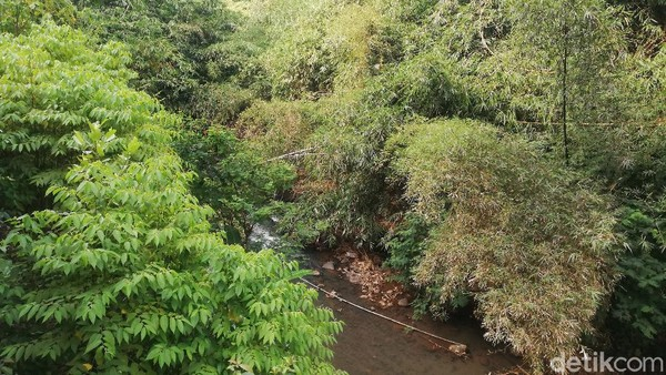 Aliran sungai Cipeles dan pepohonan besar menjadi pemandangan yang ada di lembah jurang Cadas Pangeran.