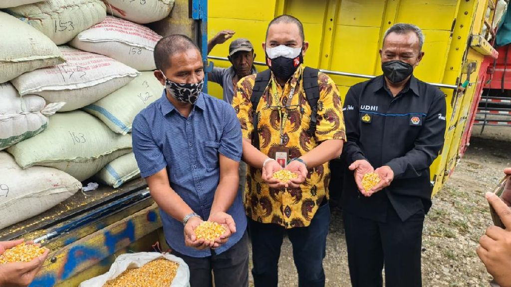 Hore! Jokowi Juga Bantu Peternak Blitar Lain 80 Ton Jagung