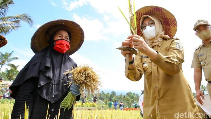 festival padi