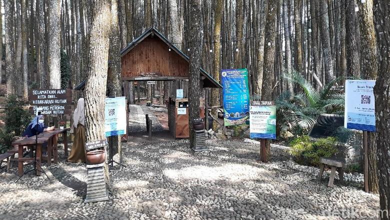 Anak-anak memberi makan burung di Hutan Pinus Sari Mangunan