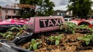Merana Banget, Taksi-Taksi Ini Jadi Kebun Sayur gegara Tak Ada Turis