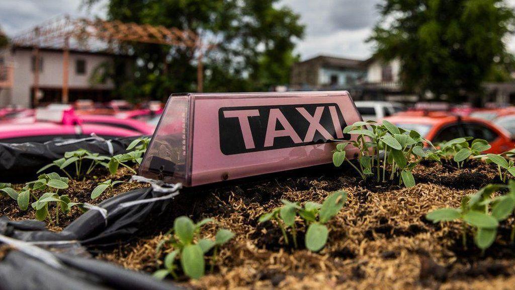 Terjepit Pandemi, Taksi Thailand Disulap Jadi Kebun