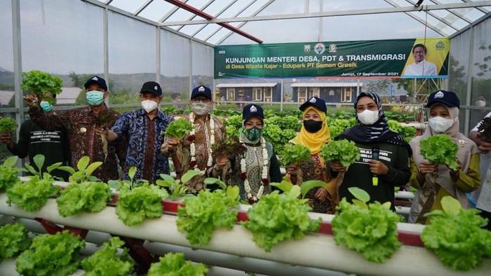 Mendes PDTT Abdul Halim Iskandar kunjungi Edupark Semen Gresik. Beragam fasilitas ada di edupark itu dari lahan pertanian holtikultura hingga peternakan domba.