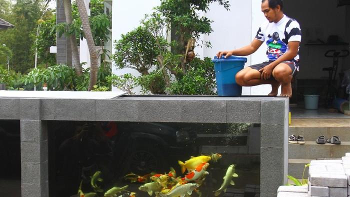 Rumah seorang pengusaha ikan di Malang jadi sorotan. Pasalnya pagar rumah tersebut berbentuk kolam yang dihiasi beragam ikan koi. Penasaran?
