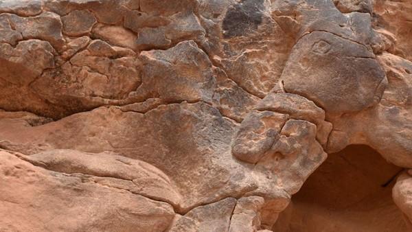 Belum jelas mengapa pahatan unta itu diciptakan, namun para peneliti memperkirakan karya itu dibuat sebagai titik temu suku-suku nomaden. (AFP)