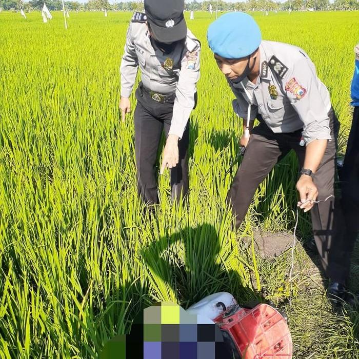 Petani di Ngawi tewas tersetrum jebakan tikus listrik. Peristiwa tersebut terjadi pagi tadi.