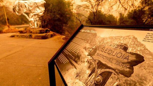 Pohon General Sherman dibungkus dengan aluminium foil di Taman Nasional Sequoia, California