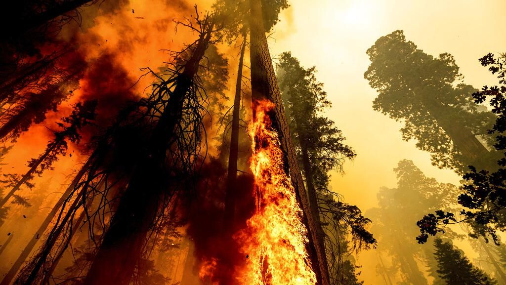 Kebakaran Hutan di California Sempat Membakar Pohon Raksasa Sequoia