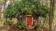 Rumah Pohon Winnie the Pooh Disewakan, Ada yang Kangen?