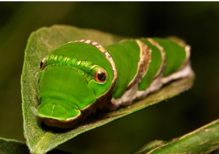fotoinet wajah aneh hewan tampak seperti alien
