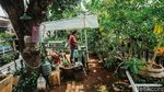 Kiat Produktif di Masa Pandemi dengan Bertani Hidroponik