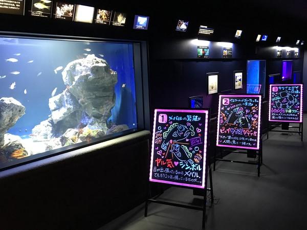 Akuarium ini berada di Sunshine City di distrik Ikebukuro Tokyo yang terkenal dengan banyak kesenangan berbelanja, kuliner, dan atraksi. Traveler yang ke sini dapat menghabiskan sepanjang hari di mega kompleks yang luas ini.