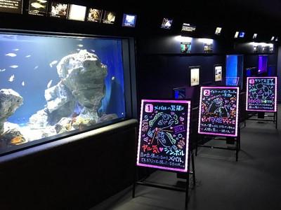 Pameran Unik di Akuarium: Lihat Hewan Laut Kawin