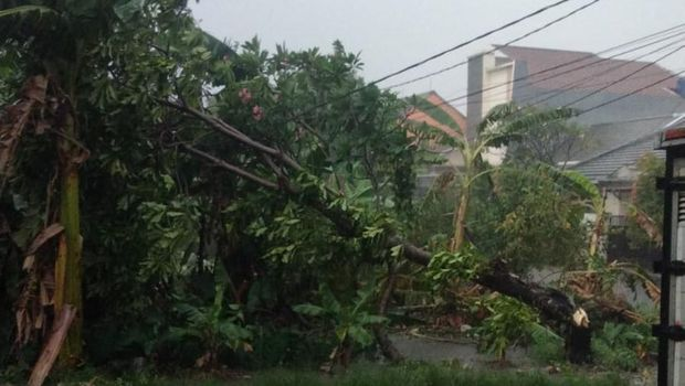 Pohon tumbang timpa kabel listrik di Kavling UI Timur, Beji, Depok