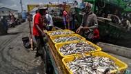 KKP Buka Suara soal Aturan yang Bikin Harga Ikan Naik hingga 400%